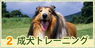 成犬トレーニング