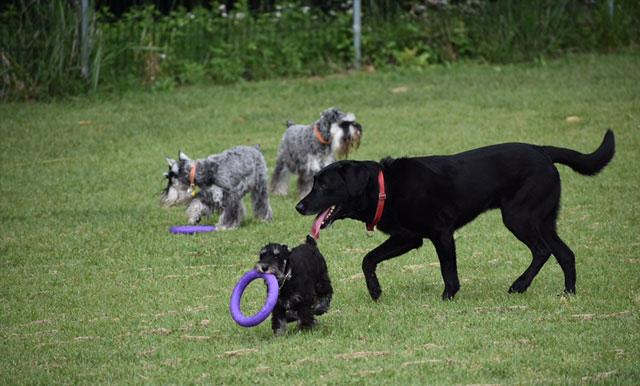 犬同士の関係から学ぶ社会化